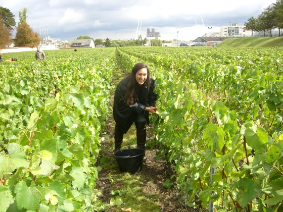 Harvest at Clos Lanson, Reims - Local Food And Wine