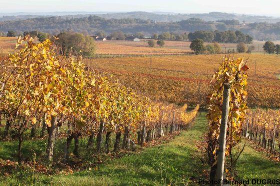 pacherenc du vic bilh vineyards
