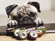 _big-15392_101-made-in-pet-des-petites-friandises-raffinees-pour-chiens-et-chats
