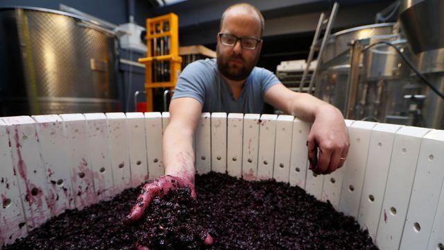 un-employe-des-vignerons-parisiens-a-l-oeuvre-a-paris-le-19-octobre-2016_5734223
